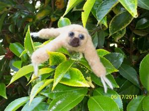 Needle Felting ANIMALS - baby sloth