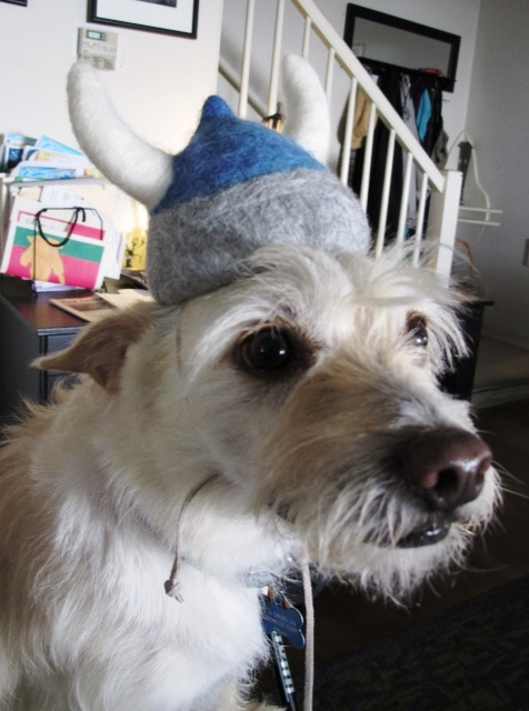 Needle Felted Viking Helmet on Dog