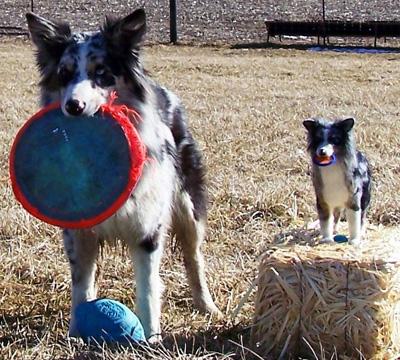 needle felted dog by Adriana Plum of Turkey Run Farm