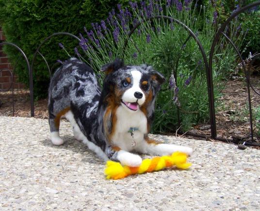 Needle Felted Dog Aussie by Adriana Plum of Turkey Run Farm