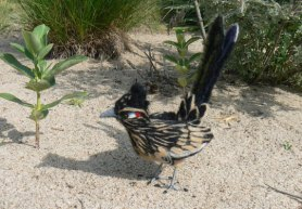 Lively Needle Felted Road Runner by Michelle Leibgott-Osinga Featured on the Living Felt Blog