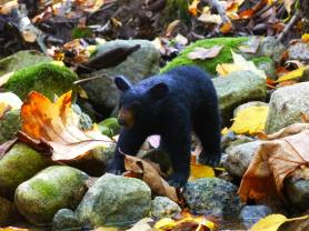 Needle Felted Black Bear by Sue Gager Palmer on www.livingfelt.com/blog