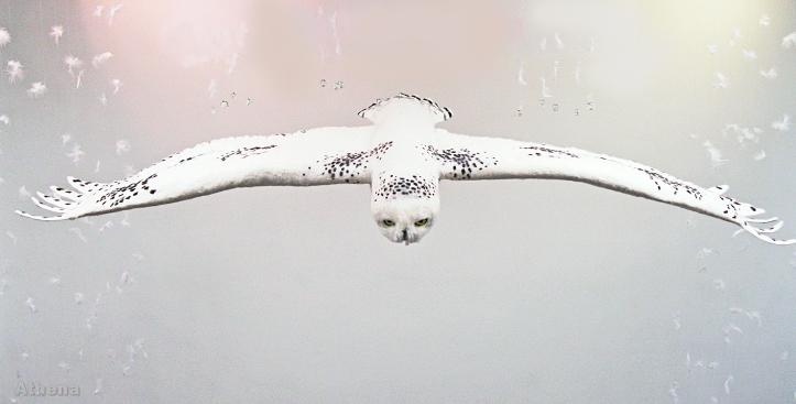 Judy Titche  Felted Owl  on www.livingfelt.com/blog