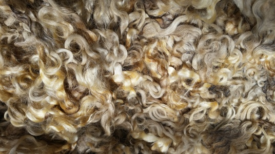 santa locks for felting - raw, unwashed